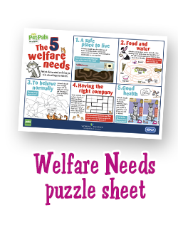 A fun way for pupils to learn the 5 Welfare Needs